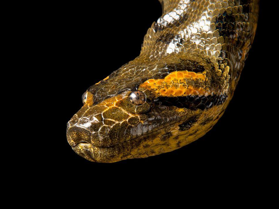 Impactantes serpientes - Parte II