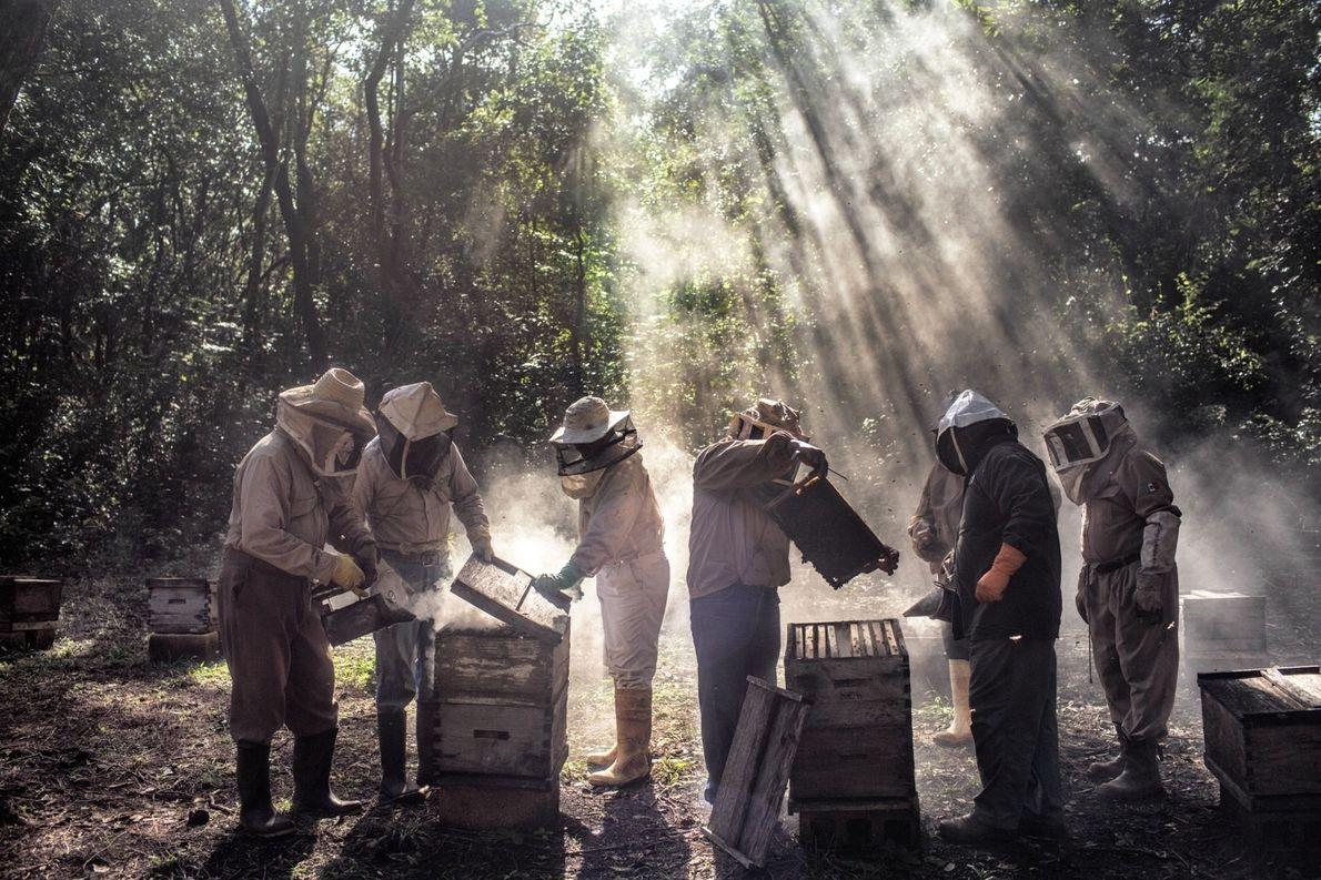 Un grupo de apicultores de Tinún, México, cuidan de sus colmenas en temporada baja. Las plantas ...