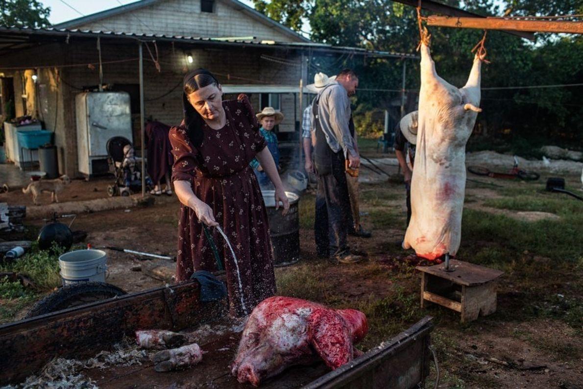 Ana Ham limpia la cabeza de un cerdo en el Campamento Temporal Menonita en México. La ...