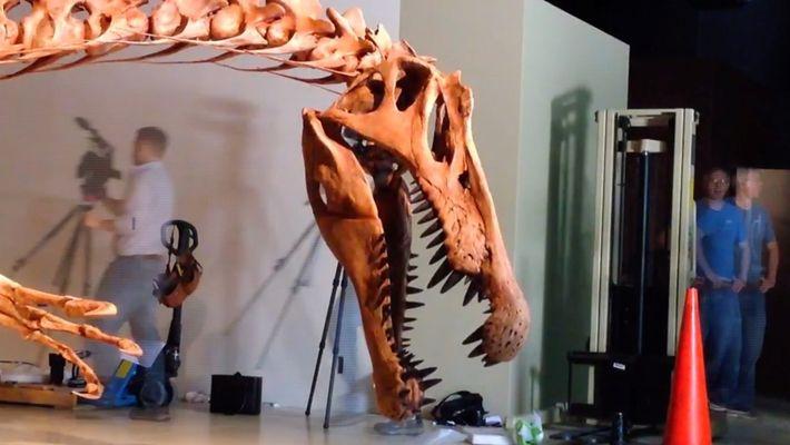 Hipnótico time-lapse de la exhibición de un Spinosaurus