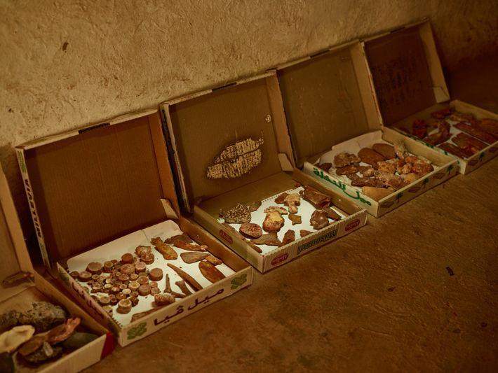 Cajas de repostería rellenas de fósiles se alinean en la pared de una casa cerca de ...