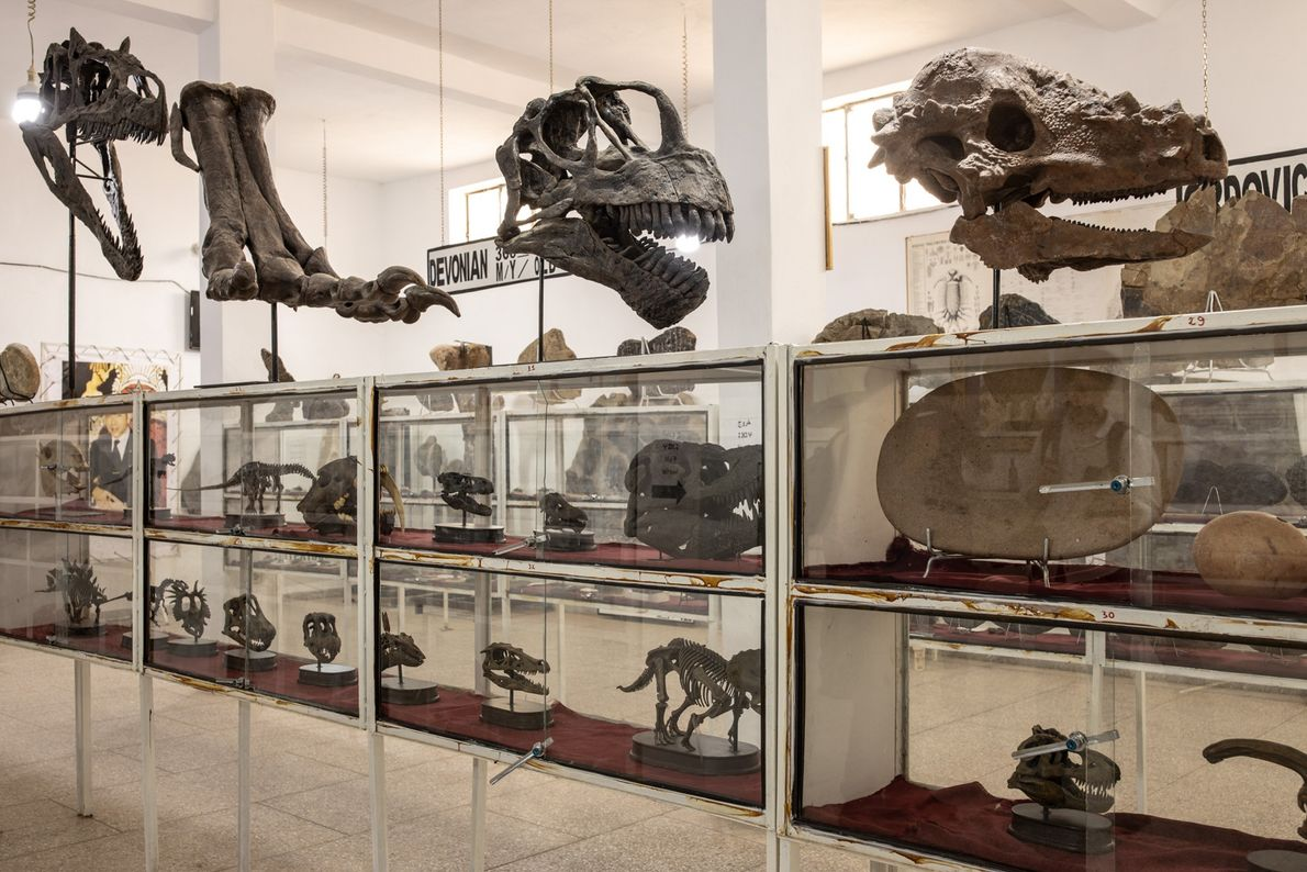 El Museo de Fósiles de Tahiri, administrado por un comerciante de fósiles, incluye restos marroquíes y ...