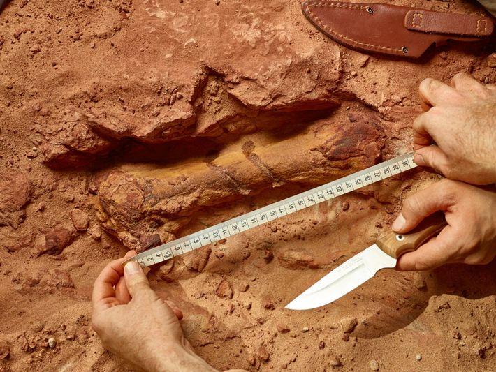 Un hueso de la pata del Spinosaurus se asoma desde la piedra arenisca roja en el ...