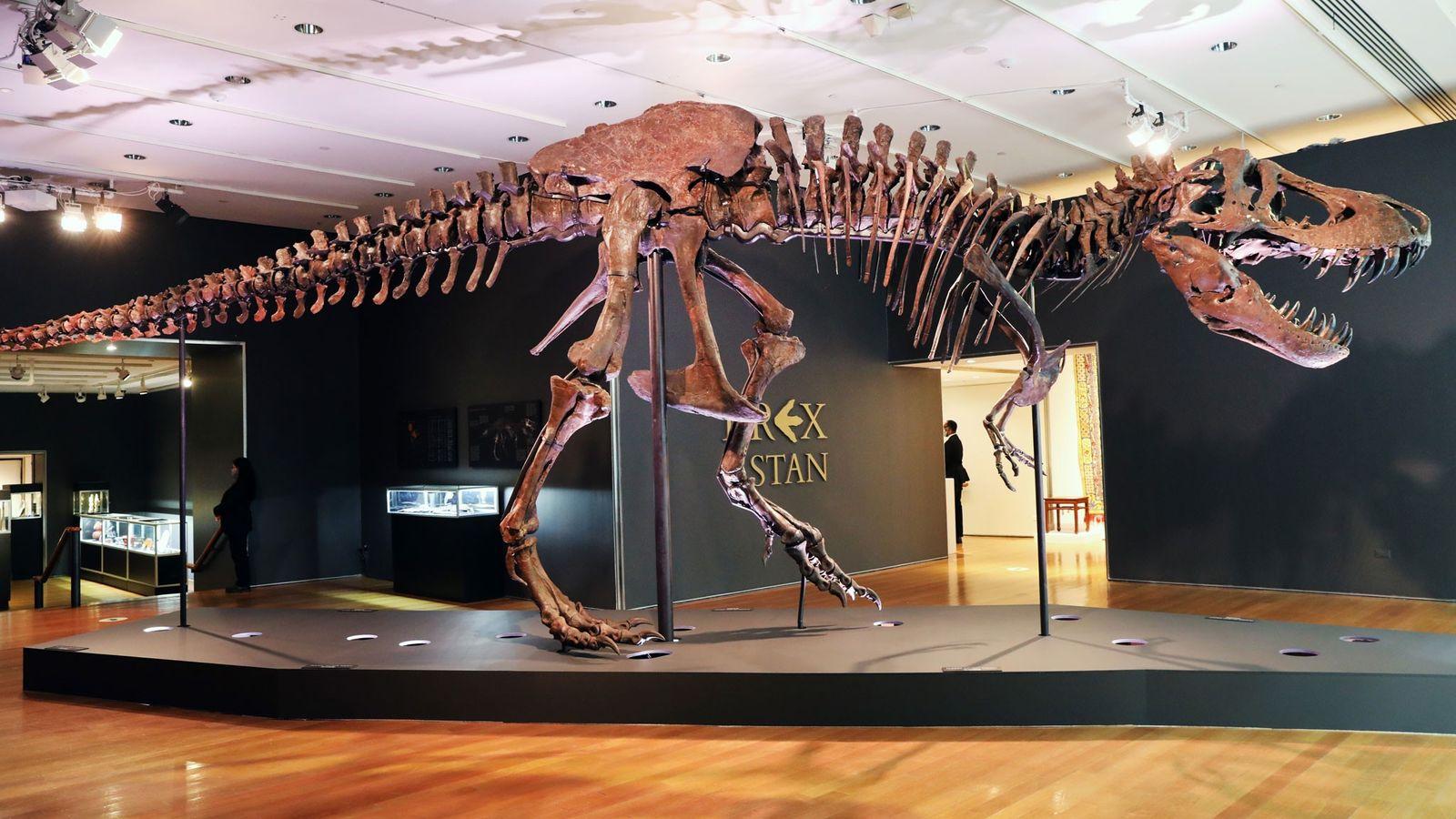El fósil de Tyrannosaurus rex conocido como Stan se exhibe en una galería en la casa de subastas ...