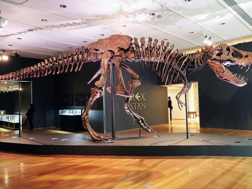 """La comunidad científica exhibe su preocupación ante la venta del T.Rex """"Stan"""" en una subasta"""