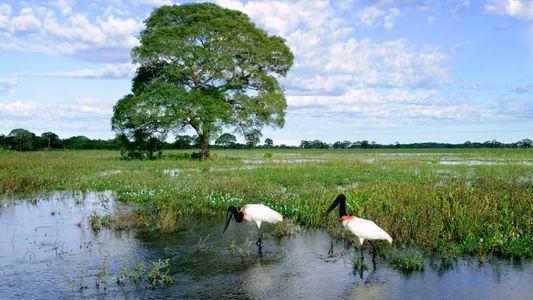 Rincones donde descubrir aves asombrosas