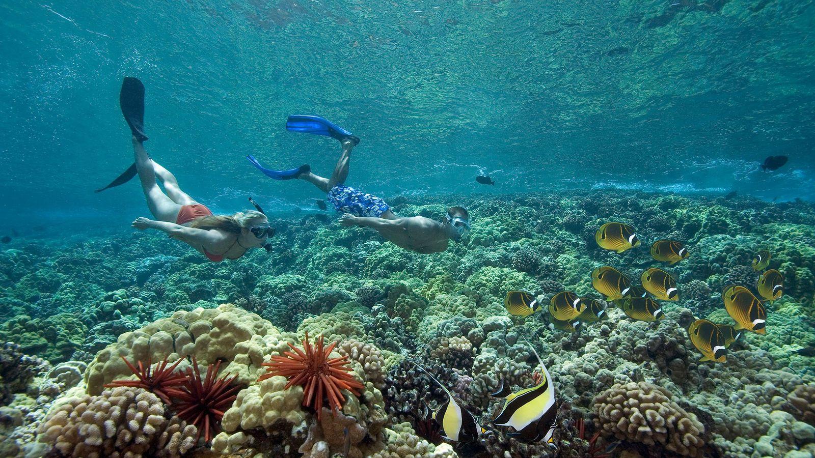 Dos personas buceando junto a ídolos moros y peces mariposa en Hawái.