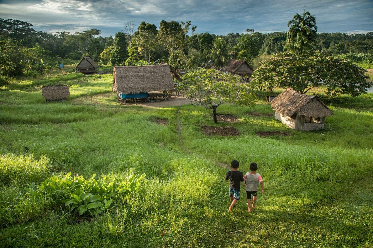 La comunidad huni kuin de Santa Rey, con 200 habitantes, accede a una parcela de tierra ...