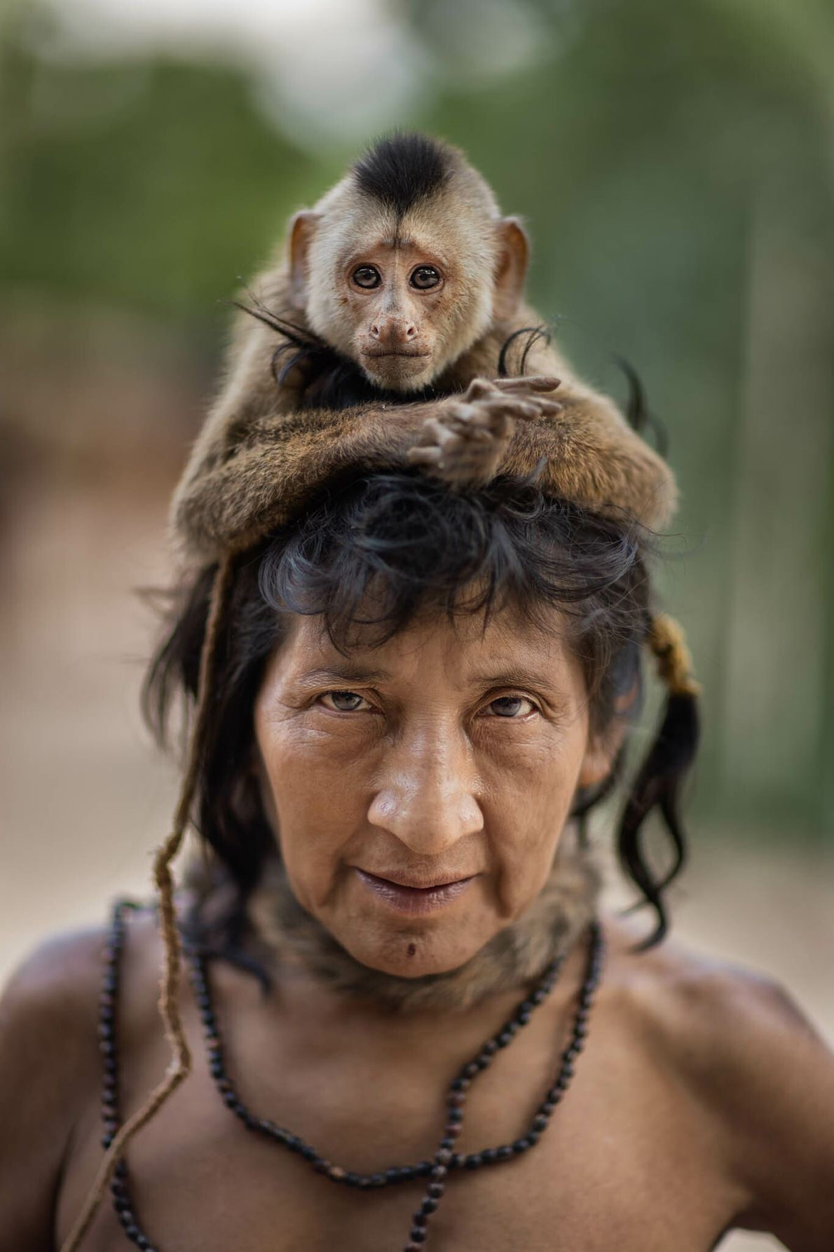 Un capuchino Cebus kaapori actúa de corona sobre Ximirapi, quien abandonó el asentamiento de Posto Awá ...