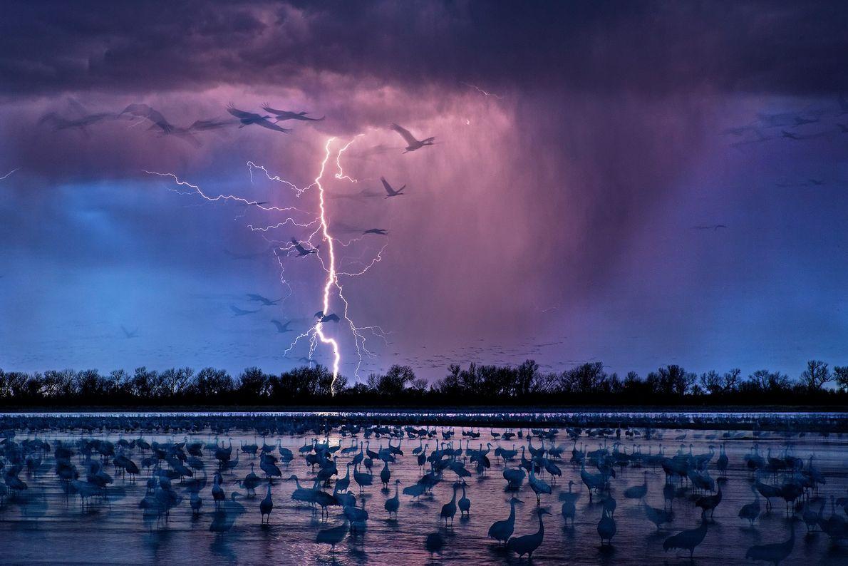 La silueta de las aves de la pradera se recorta en un cielo tormentoso sobre el ...