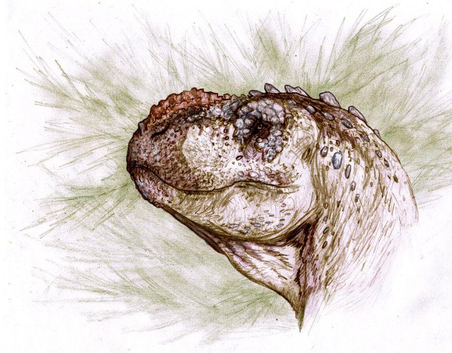 Identifican una nueva especie de dinosaurio carnívoro en la Patagonia Argentina