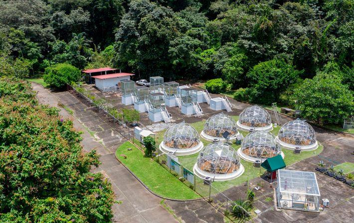 En el Instituto Smithsonian de Investigaciones Tropicales en Gamboa, Panamá, los árboles se cultivan en domos, ...