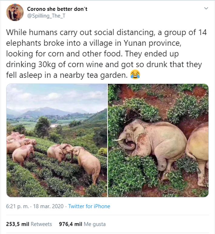 Las publicaciones en las redes sociales afirmaron que, en ausencia de los seres humanos, los elefantes ...
