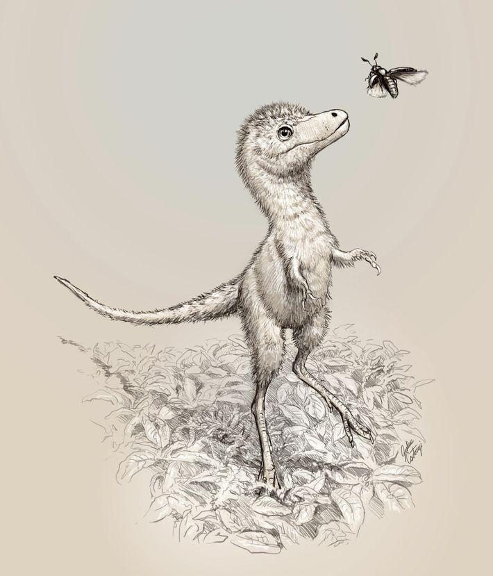 Esta ilustración muestra el posible aspecto de las crías de Tyrannosaurus rex. Los fósiles embrionarios recientemente ...