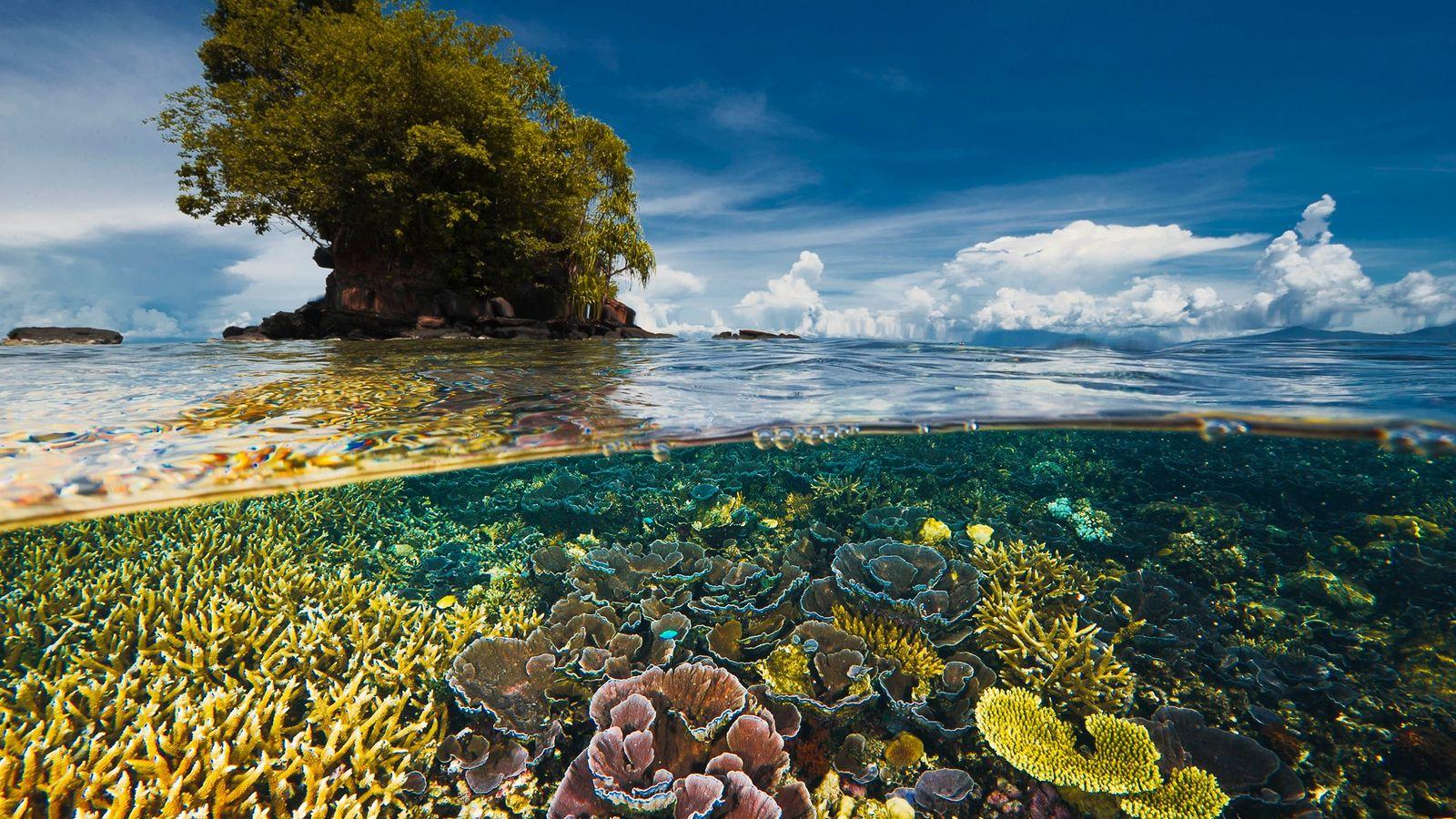 Una península cercana protege un jardín de delicados corales de las tormentas en la bahía de ...