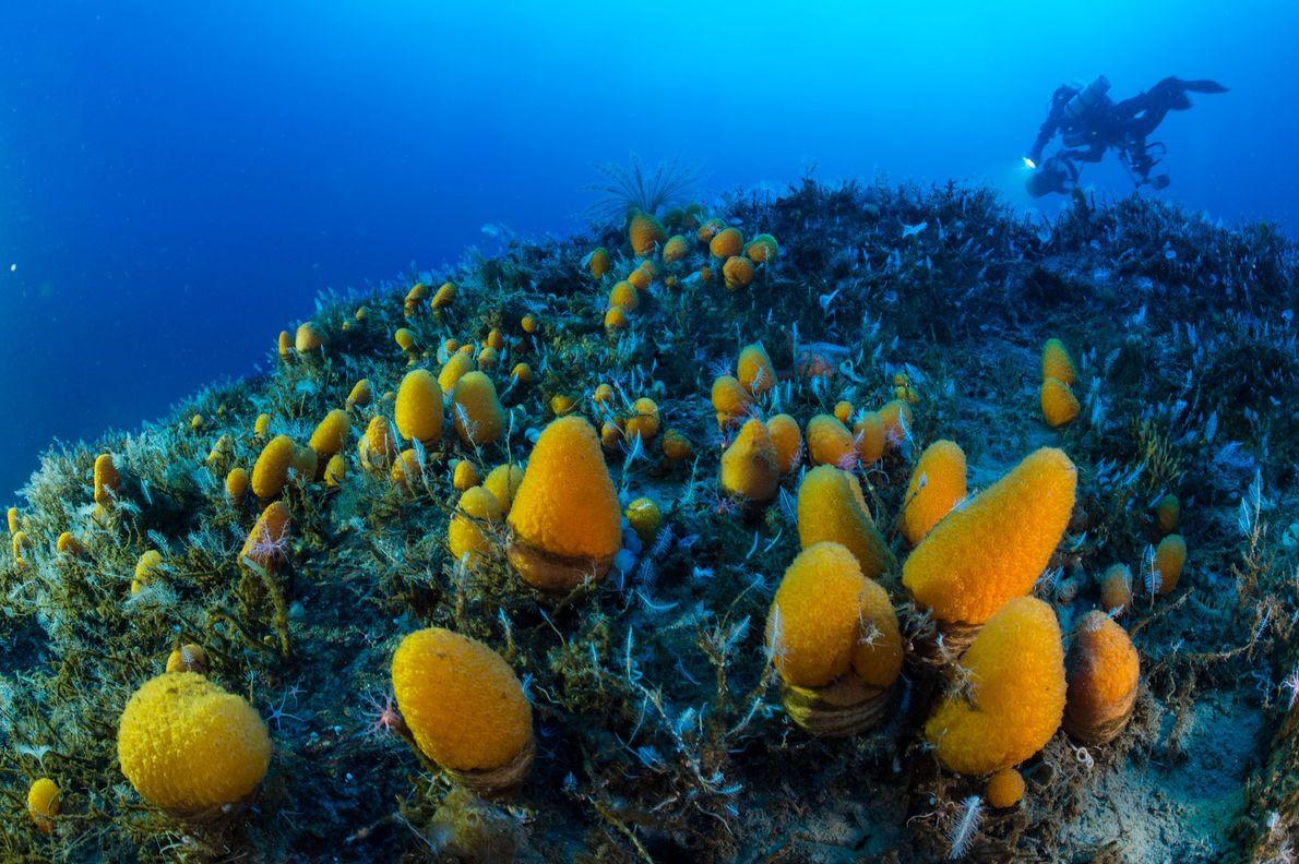 Amarrados al lecho marino a más de 200 pies de profundidad, sumergiéndose en el agua para ...