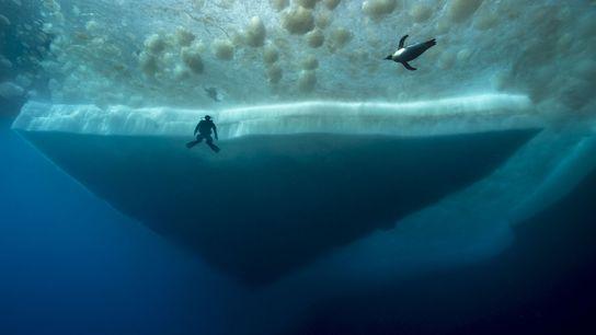 Un buceador contempla a un pingüino emperador mientras nada. Las zonas marrones de la superficie son ...