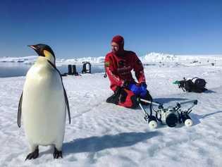 Un pingüino emperador acompaña a los fotógrafos en la cima del hielo. El campamento de día ...