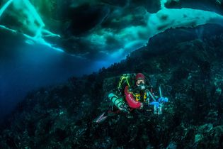 A photographer documents sea life under Antarctica. The divers carried around 200 pounds of gear during ...