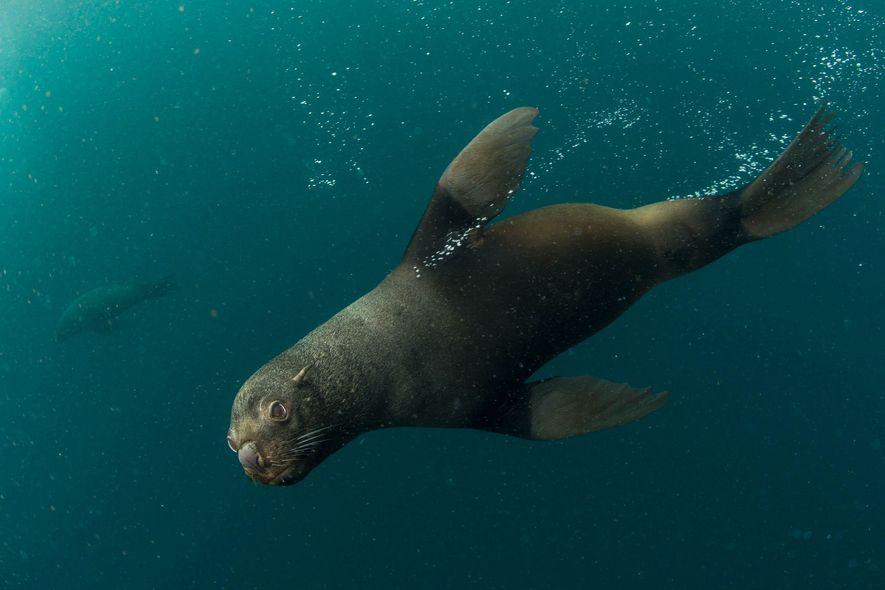 National Geographic presenta los resultados de la expedición de Pristine Seas a Yaganes