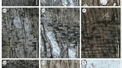 Restos de vegetación fosilizada dan indicios de cómo era el ecosistema del Altiplano hace millones de ...