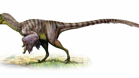 Con un peso de hasta 45 kilogramos —el tamaño aproximado de un lobo—, es probable que ...