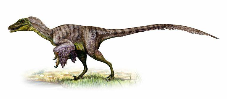 Por Que El Velocirraptor Es Uno De Los Dinosaurios Mas Incomprendidos National Geographic Типовой вид — velociraptor mongoliensis. los dinosaurios mas incomprendidos