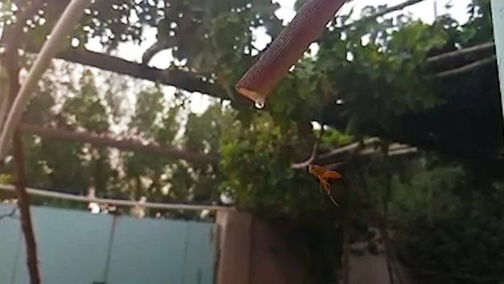 Hipnótico video de una avispa tomando agua en cámara lenta