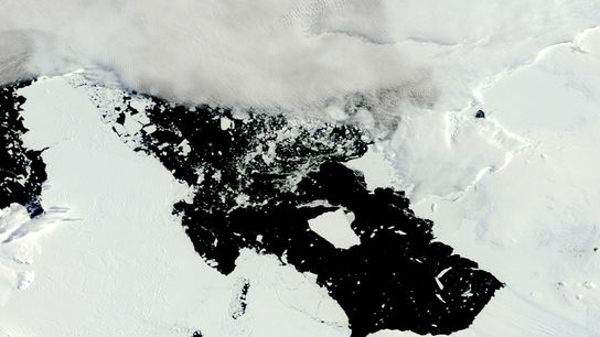 El glaciar Isla Pine, en la Antártida Occidental, está retrocediendo rápidamente. En 2014, este iceberg, de ...
