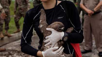 Rescatan 22 animales silvestres utilizados ilegalmente en el comercio turístico del Amazonas