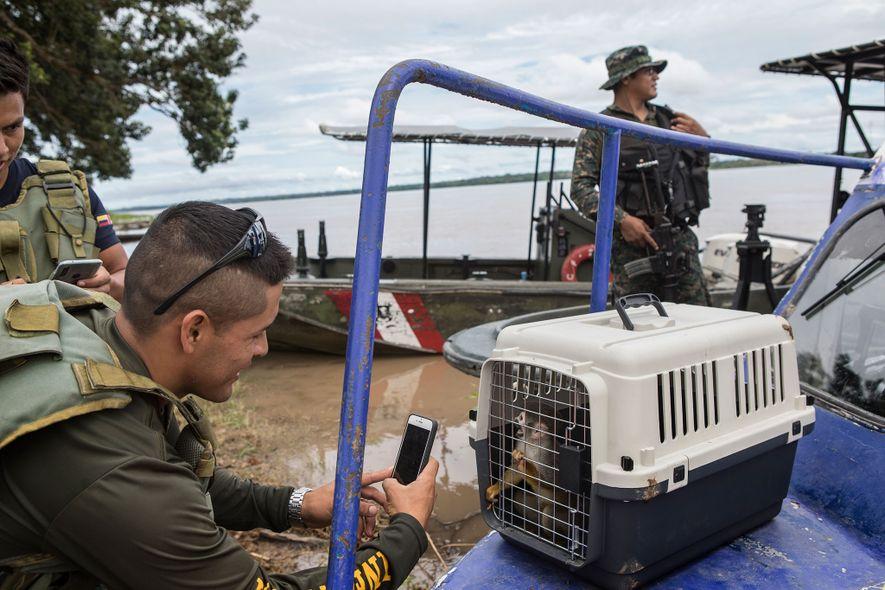 Un oficial de la fuerza aérea toma una foto de un mono ardilla rescatado. Los residentes de Puerto Alegría reciben propinas de visitas turísticas, mientras que las agencias de turismo que realizan las visitas obtienen ganancias aún mayores.