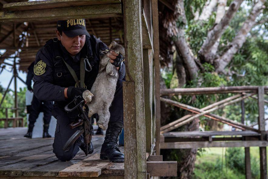 """Un oficial de policía quita un perezoso de una barandilla de madera. Esta gran plataforma es el """"lugar de la selfie"""" principal para docenas de turistas que llegan en barco todos los días para agarrar a los animales salvajes. Empresas de turismo locales facilitan las visitas."""