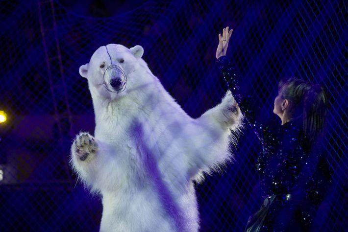 Detrás de una red, un oso polar baila en el Circus on Ice en Kazán, Rusia. ...
