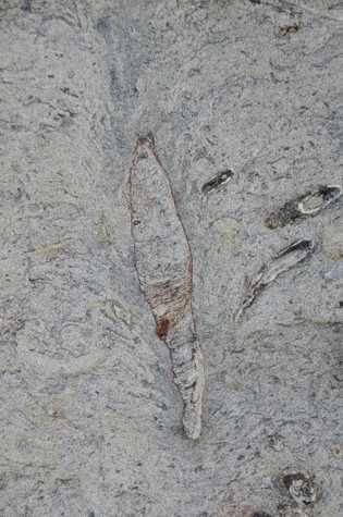 La parte superior de la galería fosilizada hallada en Taiwán forma una estructura de derrumbe con ...