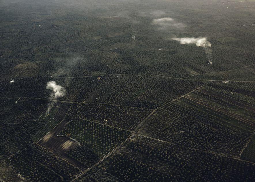 La Xylella no ha afectado a la mayoría de los olivares cerca de Bari. Pero ¿sobrevivirán en el futuro?