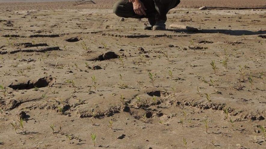 Registro de huella de yaguareté. Imagen tomada del sitio web de Administración de Parques Nacionales (www.parquesnacionales.gob.ar).