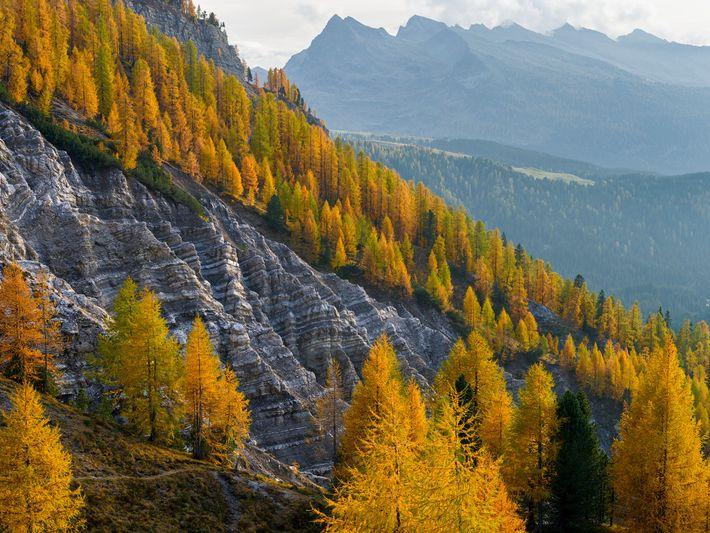 Una ladera de la montaña está cubierta de bosques con alerces dorados en los Dolomitas italianos. Los ...